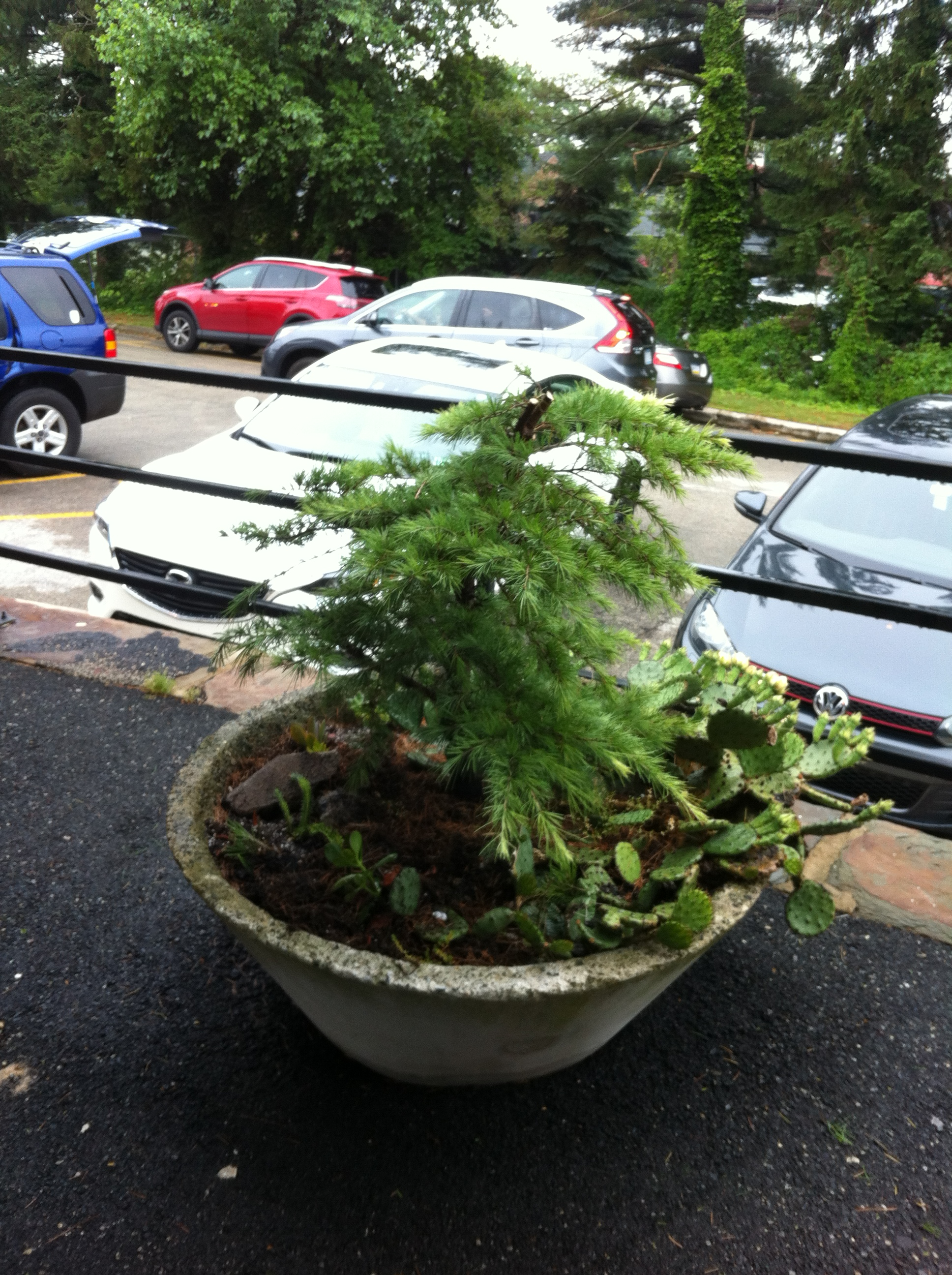 Planter on Platform 2 Jun 16 16